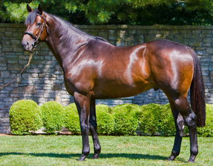 Stallion Roster Display